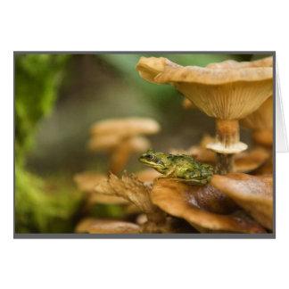 Frog on Mushrooms Card