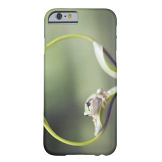 Frog on plant stem, Biei, Hokkaido, Japan Barely There iPhone 6 Case