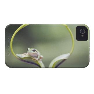 Frog on plant stem, Biei, Hokkaido, Japan Case-Mate iPhone 4 Cases