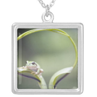 Frog on plant stem, Biei, Hokkaido, Japan Silver Plated Necklace