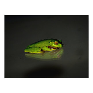 Frog Photo Print