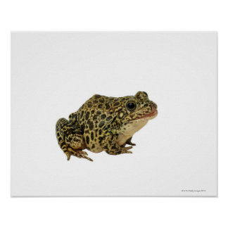 Frog shadow poster