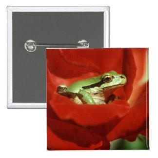 Frog Sitting on Red Rose Pin