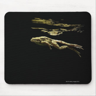 frog swimming in the dark just below the surface mouse mat