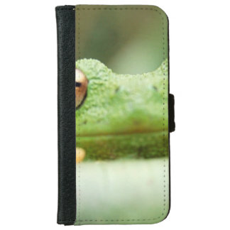 Froggy iPhone 6 Wallet Case