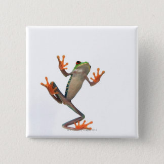 Frogs belly 15 cm square badge
