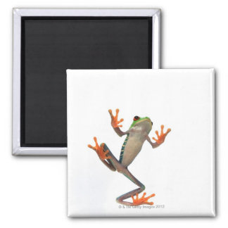 Frogs belly square magnet