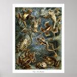Frogs - Ernst Haeckel Poster