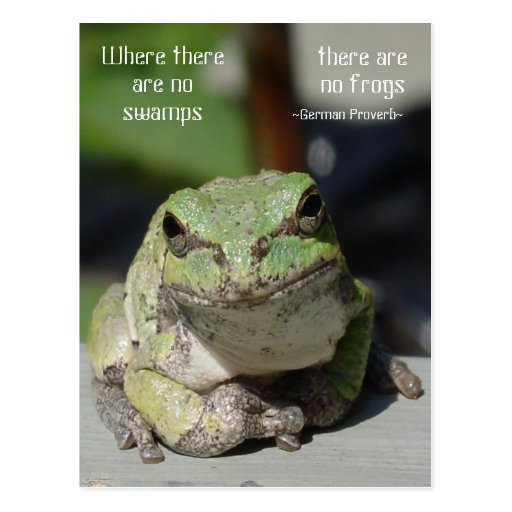 Frogs & Swamps Post Cards
