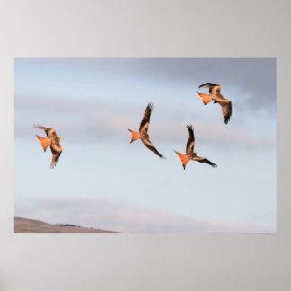 Frolicking Red Kite Print