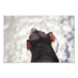 From Behind a Tasmanian Devil Photo Print