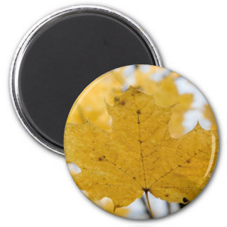 from fall to heaven 6 cm round magnet