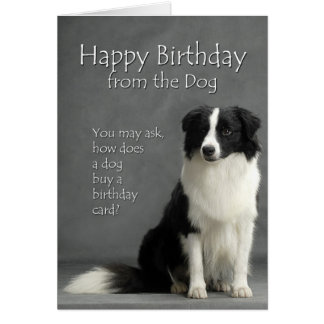 From the Border Collie Greeting Card