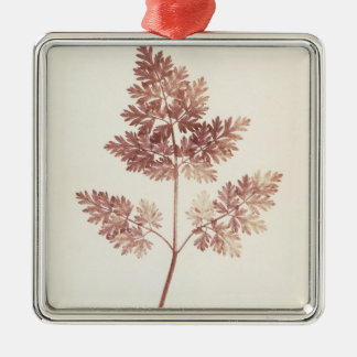 Fronds of Leaves, 1843 (b/w photo) Christmas Ornament