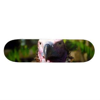 Front Facing Turkey Vulture Closeup Skateboards