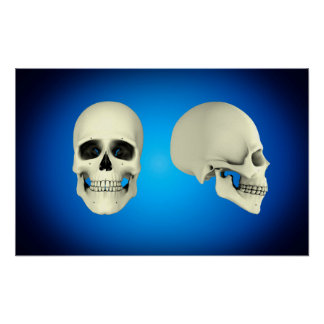 Front View And Side View Of Human Skull Poster