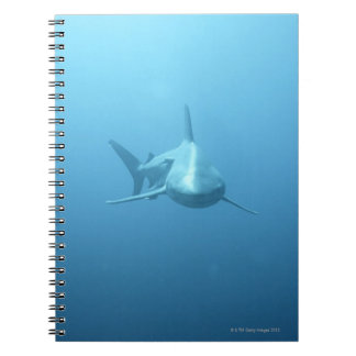 Front view of a Tiger Shark Notebook