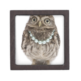 Front view of a Young Little Owl wearing a Premium Keepsake Box