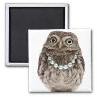 Front view of a Young Little Owl wearing a Square Magnet