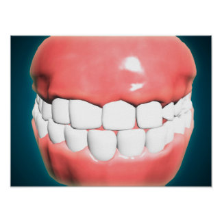 Front View Of Human Mouth With Teeth And Gums Poster