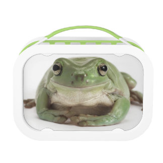 Front View Studio shot of a Smiling, Whites Tree Lunch Box