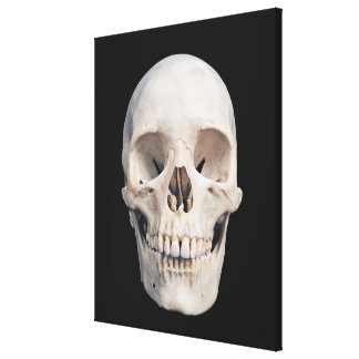 Frontal View of Human Male Skull Canvas Print