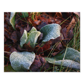 Frost Covered Leaves Art Photo