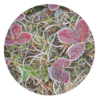 Frost covered leaves, Canada Plate