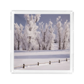 Frost Covered Trees and Fence, Colorado Acrylic Tray