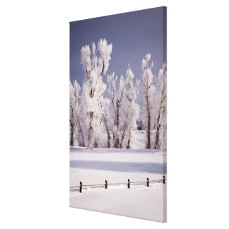 Frost Covered Trees and Fence, Colorado Canvas Print