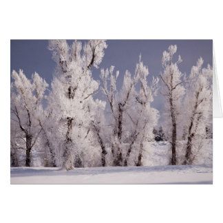 Frost Covered Trees and Fence, Colorado Card