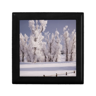 Frost Covered Trees and Fence, Colorado Gift Box