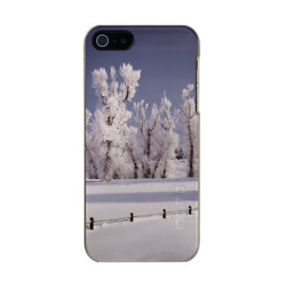 Frost Covered Trees and Fence, Colorado Incipio Feather® Shine iPhone 5 Case