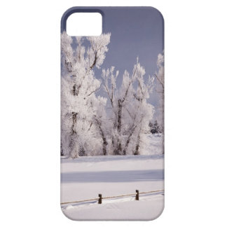 Frost Covered Trees and Fence, Colorado iPhone 5 Covers