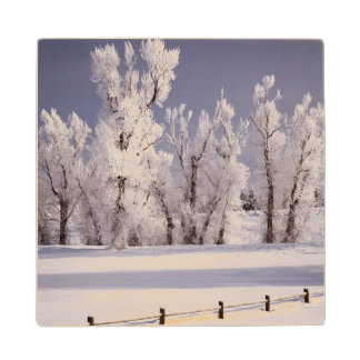Frost Covered Trees and Fence, Colorado Maple Wood Coaster