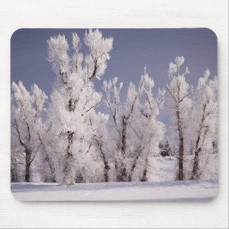 Frost Covered Trees and Fence, Colorado Mouse Mat