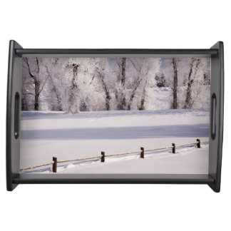 Frost Covered Trees and Fence, Colorado Serving Tray