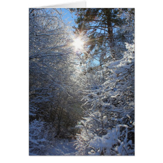 Frost Covered Trees Card