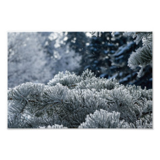 FROST IN THE FOREST by Michelle Diehl Photo Print