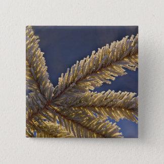 Frost on evergreen tree, Homer, Alaska 15 Cm Square Badge