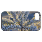 Frost on evergreen tree, Homer, Alaska Case For The iPhone 5
