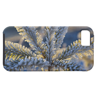 Frost on evergreen tree, Homer, Alaska iPhone 5 Covers