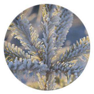 Frost on evergreen tree, Homer, Alaska Party Plates