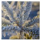 Frost on evergreen tree, Homer, Alaska Tile