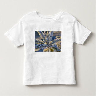 Frost on evergreen tree, Homer, Alaska Toddler T-Shirt