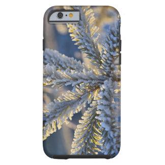 Frost on evergreen tree, Homer, Alaska Tough iPhone 6 Case