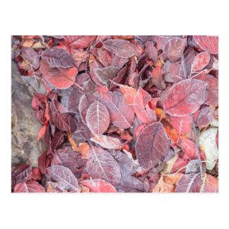 Frost on fallen leaves, Fall colors, Mill Creek Postcard