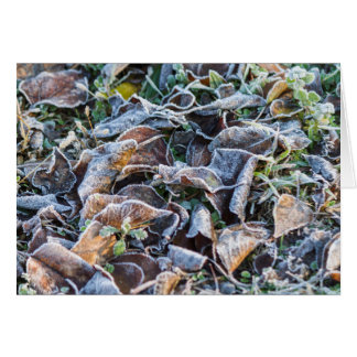 frost on leaves in winter card