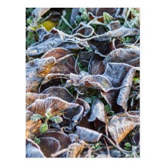 frost on leaves in winter postcard
