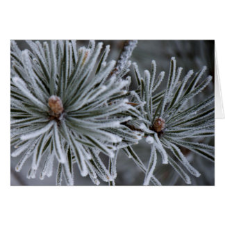 Frost on Pine Needles Greeting Card